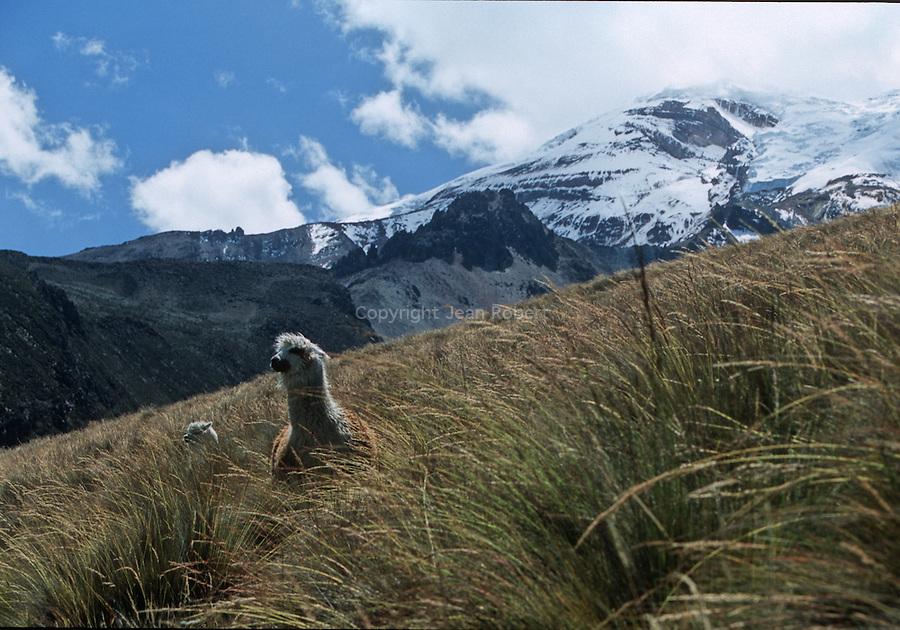 Amérique du Sud. Equateur. Trekking sur les volcans d'Equateur.South America. Ecuador. Trekking on the volcanoes