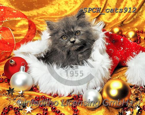 Xavier, CHRISTMAS ANIMALS, WEIHNACHTEN TIERE, NAVIDAD ANIMALES, photos+++++,SPCHCATS912,#xa# ,cat