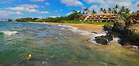 A honu (turtle) feeding near Makena Surf Resort, Maui.
