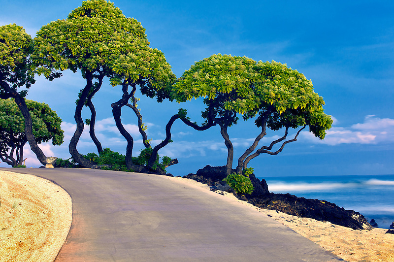 Pathway, heliotrope trees and ocean. Hawaii, The Big Island.
