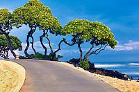 Pathway, heliotrope trees and ocean. Hawaii, The Big Island.