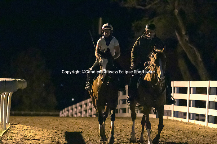 October 23, 2020 : Tiz the Law works at Keeneland Race Course on October 23, 2020 in Lexington, KY.  Candice Chavez/ESW/CSM