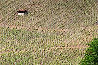 vineyard hut cote rotie rhone france