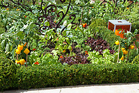 Peppers, tomatoes, with flowers, formal boxwood edging in edible landscaping