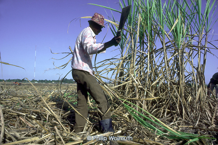 A Haitian canecutter working on a sugar plantation in La Romana