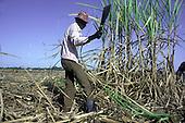 A Haitian canecutter working on a sugar plantation in La Romana