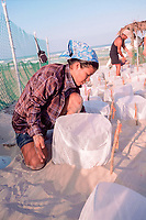 volunteer covers nests of Kemp's ridley sea turtles, Lepidochelys kempii, with mesh to keep out flies that lay eggs in nests; wire cages keep out larger predators, Rancho Nuevo, Mexico, Gulf of Mexico, Atlantic Ocean