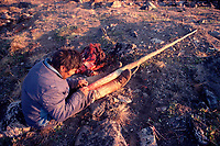 Inuit hunter cleans Narwhal tusk, Monodon monoceros, It will fetch a good price at the local Trading Store. Northwest Greenland, Arctic
