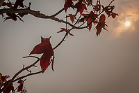 The juxtaposition of red autumn leaves against a red sky tinged by the smoke of nearby wildfires, raging out of control.