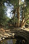 Ein A-Dura in the Golan Heights