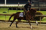 October 30, 2018 : Giant Expectations trains in preparation for the Breeders' Cup on October 30, 2018 in Louisville, KY.  Candice Chavez/ESW/CSM