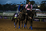 DEL MAR, CA - OCTOBER 31: Midnight Storm, owned by Venneri Racing Inc. & Little Red Feather Racing and trained by Philip D'Amato, exercises in preparation for the Breeders' Cup Las Vegas Dirt Mile at Del Mar Thoroughbred Club on October 31, 2017 in Del Mar, California. (Photo by Jon Durr/Eclipse Sportswire/Breeders Cup)