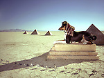 The Basenji Togo Photograph then on the Playa of the Black Rock Desert in Northen Nevada