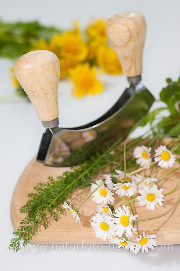Essbare Wildkräuter, Kräuter werden mit Wiegemesser, Messer auf einem Brettchen zerkleinert, Ernte, Gänseblümchen (Bellis perennis), Löwenzahn (Taraxacum officinale), Schafgarbe (Achillea millefolium), Taubnessel (Lamium spec.), Gundermann (Glechoma hederacea), Edible wild herbs, herbs are crushed with mezzaluna, knife on a small board, harvest, English Daisy, Common Yarrow, Alehoof, Ground Ivy, Blowballs, Dandelion, Dead Nettles