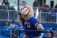 """High Point Rockers mascot """"Hype"""" entertains the crowd during the game against the Southern Maryland Blue Crabs at Truist Point on June 18, 2021, in High Point, North Carolina. (Brian Westerholt/Four Seam Images)"""