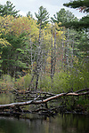 Meadow pond in the Great Brook farm state park, Carlisale, Massachusetts, vertical.