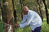 Asie/Malaisie/Env de Kuala Lumpur: Plantation d'hévéa