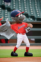 Louisville Bats mascot Buddy Bat before a game against the Columbus Clippers on May 1, 2017 at Louisville Slugger Field in Louisville, Kentucky.  Columbus defeated Louisville 6-1  (Mike Janes/Four Seam Images)