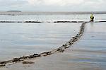 MUDHORSE FISHERMAN SOMERSET UK
