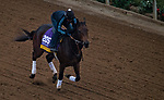 DEL MAR, CA - OCTOBER 31: Mopotism, owned by Reddam Racing, LLC and trained by Doug F. O'Neill, exercises in preparation for Longines Breeders' Cup Distaff at Del Mar Thoroughbred Club on October 31, 2017 in Del Mar, California. (Photo by Michael McInally/Eclipse Sportswire/Breeders Cup)
