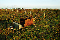 Vineyard winter pruned with a wheel barrow from an oil barrel to burn twigs. Le haut Lieu, Domaine Huet, vouvray, Loire, France