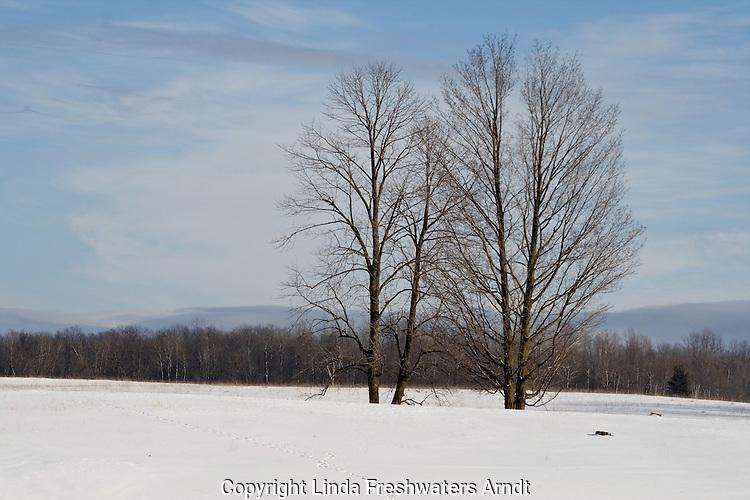 Bare trees in winter field