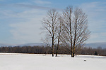 Bare trees in winter field
