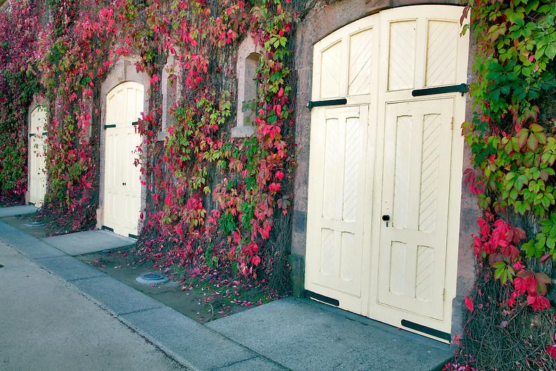 Doors ofTalbert Vineyard with fall colored ivy. Napa Valley, California