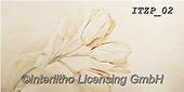 Franco, FLOWERS, BLUMEN, FLORES, paintings+++++,ITZP02,#f#, EVERYDAY