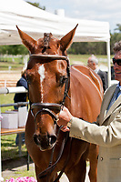 NZL-Andrew Nicholson (TESEO) 2012 FRA-Saumur International Horse Trial: FIRST HORSE INSPECTION - Wed 16 May - ACCEPTED - CIC**