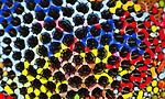 Abstract photography involving Ferrofluid