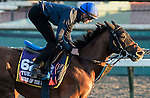 ARCADIA, CA - NOV 02: Home of The Brave, owned by Godolphin LLC Lessee and trained by Huge Palmer, exercises in preparation for the Breeders' Cup Turf Sprint at Santa Anita Park on November 2, 2016 in Arcadia, California. (Photo by Douglas DeFelice/Eclipse Sportswire/Breeders Cup)