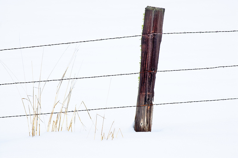Barbed wire fence in snow with grass. Elkhorn Scenic Byway. Oregon