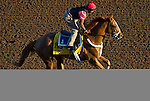 October 28, 2014:  V E Day, trained by Jimmy Jerkens, exercises in preparation for the Breeders' Cup Classic at Santa Anita Race Course in Arcadia, California on October 28, 2014. John Voorhees/ESW/CSM