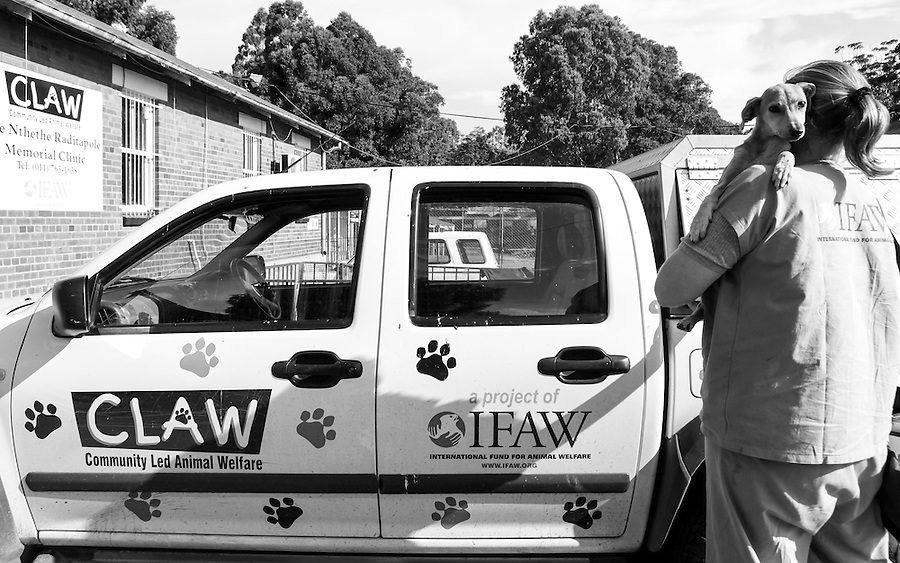 Veterinarian, Saskia Karius, carries a dog she found with a sever case of billary (tick-bite fever) outside CLAW's clinic on the grounds of Durban Deep mine near Soweto, South Africa.  IFAW's CLAW program provides veterinary services to cats and dogs in some of the poorest shantytowns outside of Johannesburg, South Africa. 2/22/12 Julia Cumes/IFAW