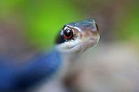Slithery Snakes from Bcpix.com