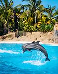 Spanien, Kanarische Inseln, Teneriffa, Puerto de la Cruz: Loro Parque - Delphin-Show | Spain, Canary Islands, Tenerife, Puerto de la Cruz: Loro Parque - Dolphin-Show