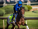 LOUISVILLE, KY - MAY 02: Thunder Snow gallops at Churchill Downs on May 02, 2017 in Louisville, Kentucky. (Photo by Alex Evers/Eclipse Sportswire/Getty Images)