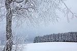 Europa, DEU, Deutschland, Hessen, Rhoen, Kuppenrhoen, Poppenhausen ( Wasserkuppe ), Naturpark Hessische Rhoen, Biosphaerenreservat Rhoen, Winter, Schnee, Baeume auf der Maulkuppe, Kategorien und Themen, Natur, Umwelt, Landschaft, Jahreszeiten, Stimmungen, Landschaftsfotografie, Landschaften, Landschaftsphoto, Landschaftsphotographie, Wetter, Wetterelemente, Wetterlage, Wetterkunde, Witterung, Witterungsbedingungen, Wettererscheinungen, Meteorologie, Wettervorhersage<br /> <br /> [Fuer die Nutzung gelten die jeweils gueltigen Allgemeinen Liefer-und Geschaeftsbedingungen. Nutzung nur gegen Verwendungsmeldung und Nachweis. Download der AGB unter http://www.image-box.com oder werden auf Anfrage zugesendet. Freigabe ist vorher erforderlich. Jede Nutzung des Fotos ist honorarpflichtig gemaess derzeit gueltiger MFM Liste - Kontakt, Uwe Schmid-Fotografie, Duisburg, Tel. (+49).2065.677997, ..archiv@image-box.com, www.image-box.com]