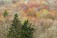 Spring colors, Blue Ridge Parkway