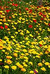 Deutschland, Bayern, Niederbayern, Naturpark Bayerischer Wald: bunte Blumenwiese | Germany, Bavaria, Lower-Bavaria, Nature Park Bavarian Forest: colourful flower meadow