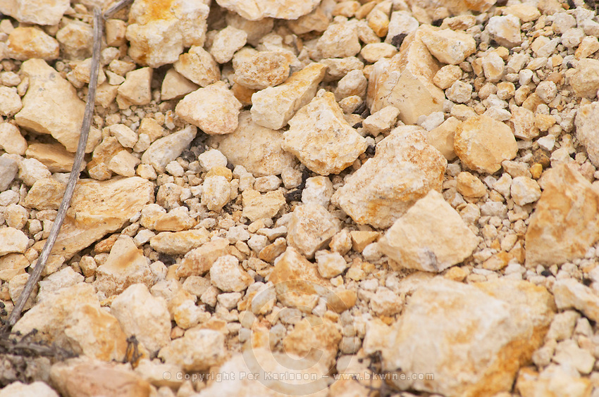 Prieure de St Jean de Bebian. Pezenas region. Languedoc. Three year old Chardonnay vine plants in the area of Frigolas on calcareous soil. Terroir soil. France. Europe. Vineyard. Soil with stones rocks. Calcareous limestone.
