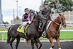 Stacked Deck(4) with Jockey Luis Saez aboard  makes their way to the winner's circle after running at the Bold Venture  Stakes at Woodbine Race Course in Toronto, Canada on September 13, 2015.