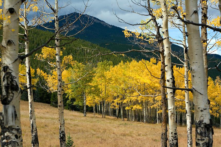 Aspens Colorado