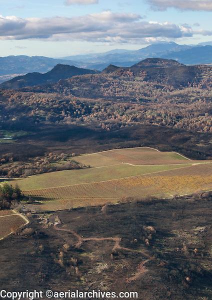 A vineyard serves as a firebreak, Atlas Fire, Napa County, California, northern California wildfires, 2017.