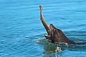 North America, USA, California, Moss Landing, Elkhorn Slough. 2011 NANPA Tier II Winner