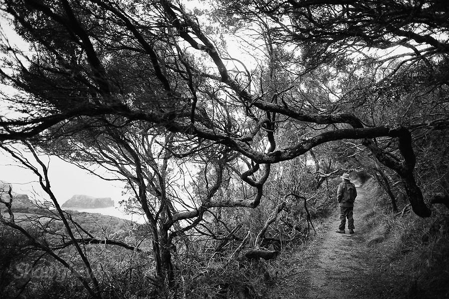 Image Ref: CA936<br /> Location: Bushrangers Bay Track<br /> Date of Shot: 07.09.19
