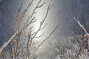 Diamond Dust in Walker Ravine from along the Old Bridle Path in Franconia Notch of the New Hampshire White Mountains during the winter months. Diamond Dust is a cloud composed of tiny ice crystals that forms near the ground. And this weather phenomenon usually happens under clear skies and during very cold temperatures.
