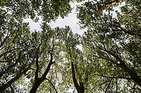 GERMANY, Ruegen, forest / DEUTSCHLAND, Mecklenburg-Vorpommern, intakter Wald, Laubwald mit Pappeln, Jasmund