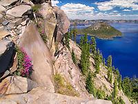 Penstemon growing on edge of Crater Lake. Crater Lake National Park, Oregon